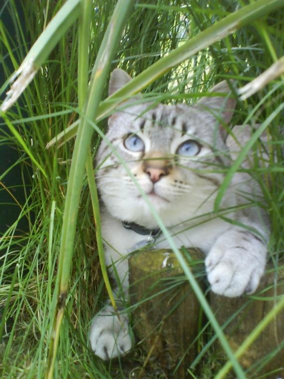 dans la jungle...