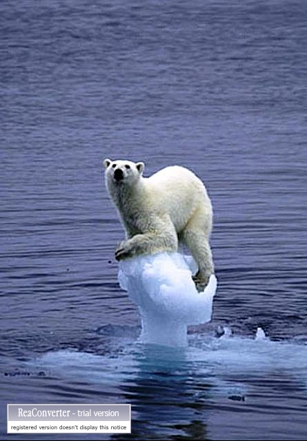 changement-climatique-ours-blanc-perche