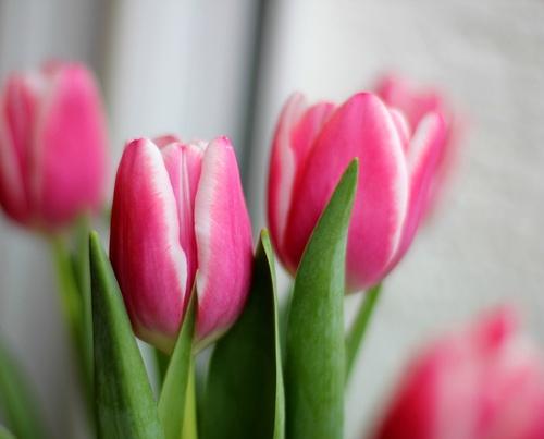 flowers-tumblr_mjux8cavxf1qd7p3ro1_500_large-img