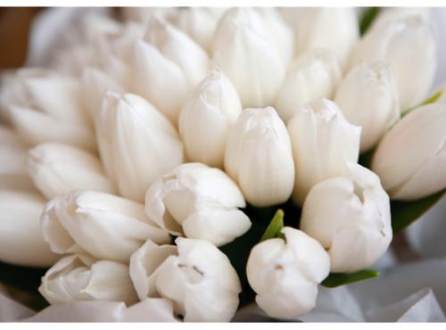 flowers-tumblr_mk5qnrt3s11qgwerro1_500_large-img