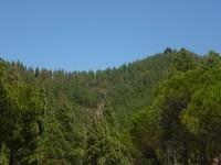la forêt de pins de l'autre côté