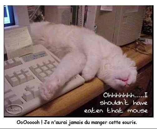 chat_manger_souris