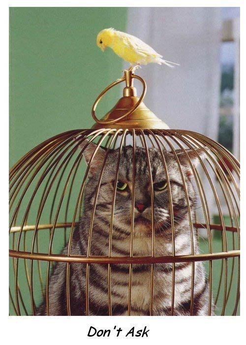 chat-prisonnier