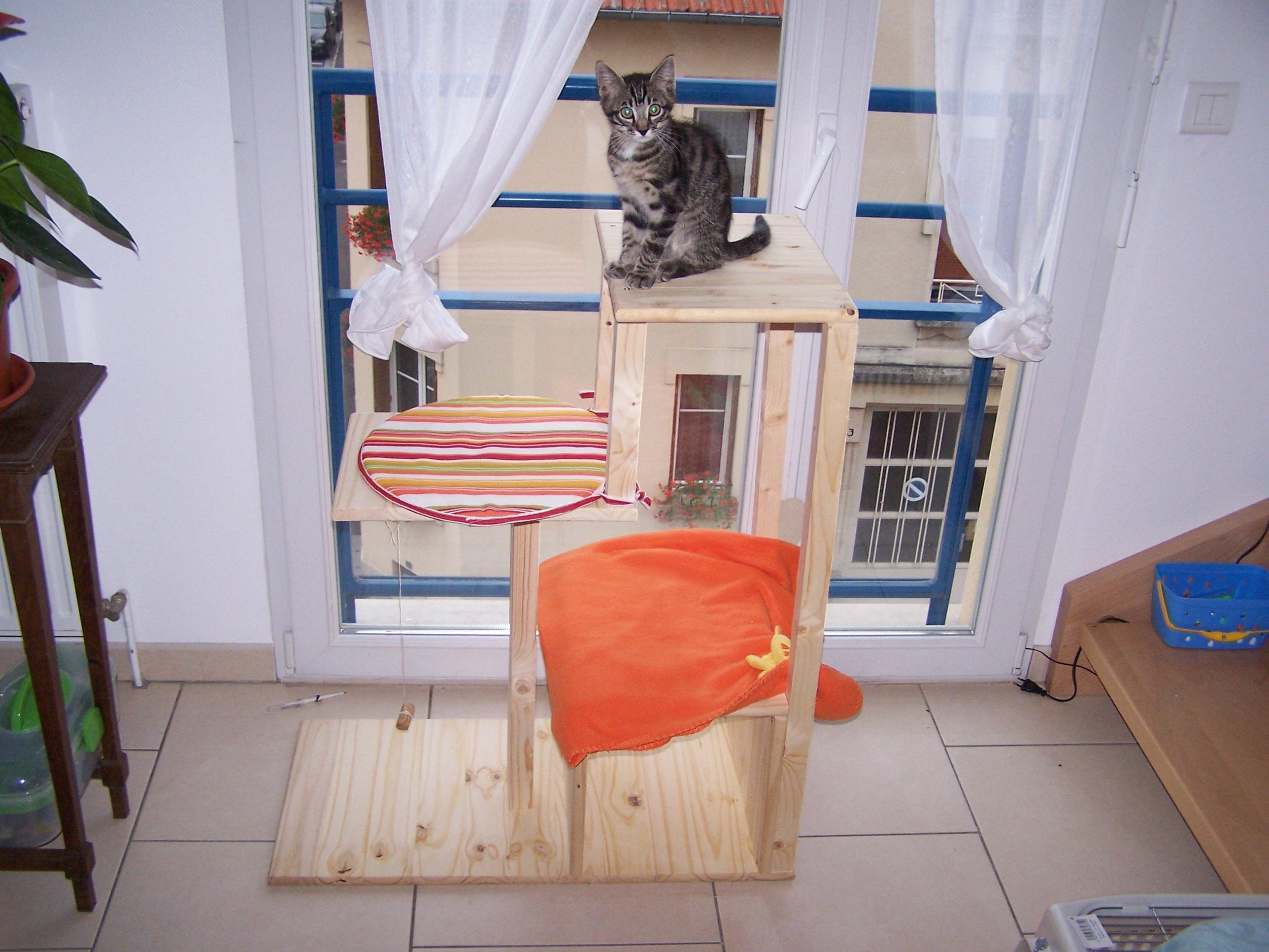 merlin sur son arbre arbre chat merlin sophieda photos club doctissimo. Black Bedroom Furniture Sets. Home Design Ideas