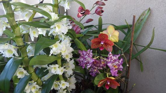 orchidees-2015-imgp1137-img