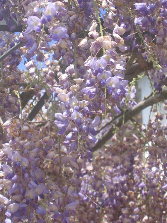 fleurs 011