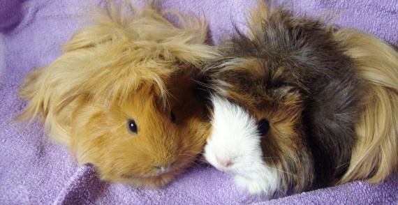 Rosie et Lila 005