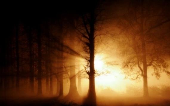 coucher de soleil Magie-foret-coucher-soleil-img