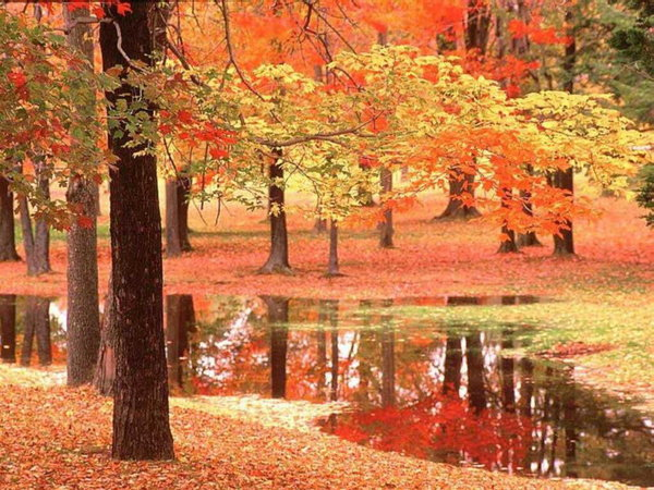 http://images.doctissimo.fr/1/divers/magie-foret/photo/hd/1697893169/1559856843d/magie-foret-foret-automne-big.jpg