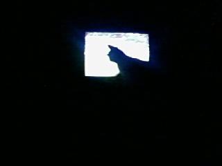 """Minou qui """"squatte"""" devant la télé"""