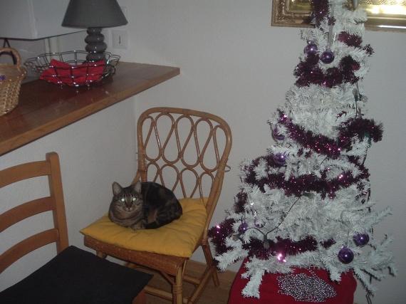 Minou à Noël