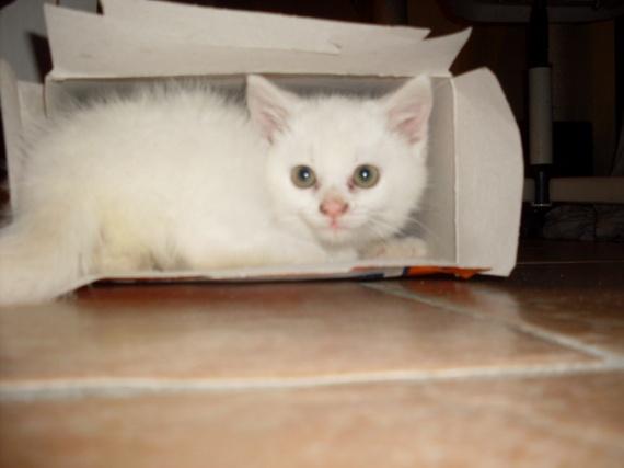 Yuiyui et les boîtes (2 mois)