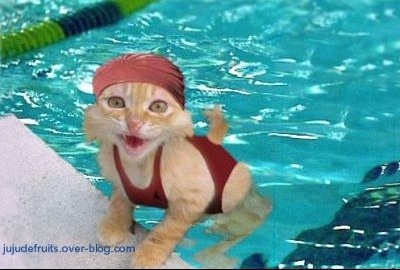 normal_chat-humou-drole-piscine