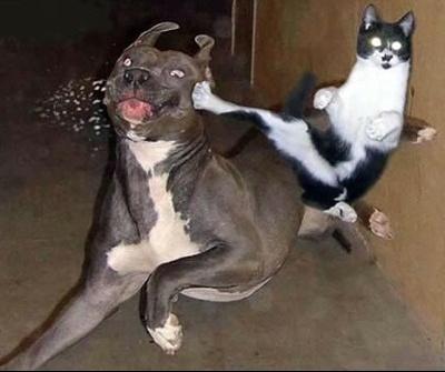 chat-boxer