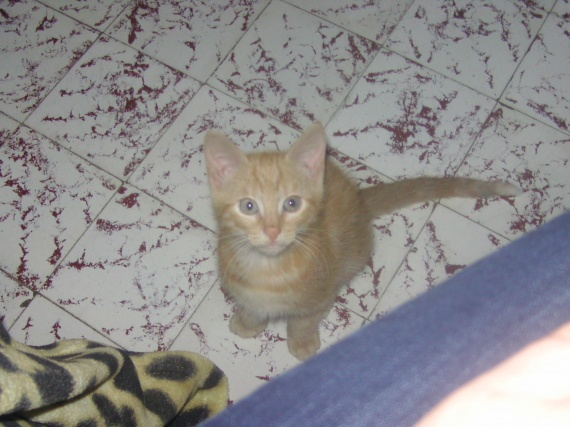chaton à adopter
