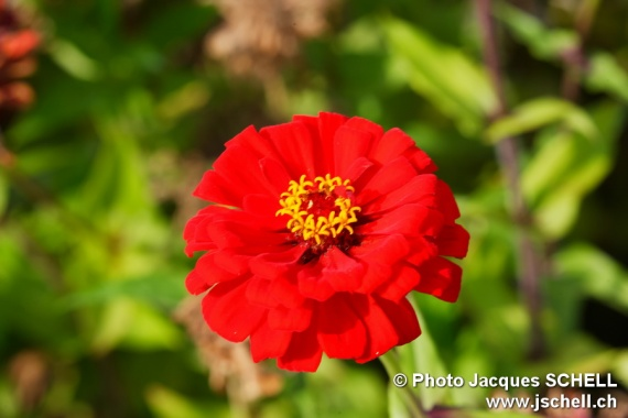 jolie fleur