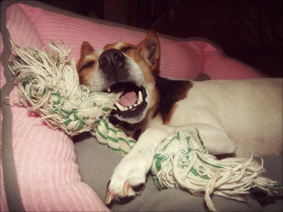 Marley'vilain'chien