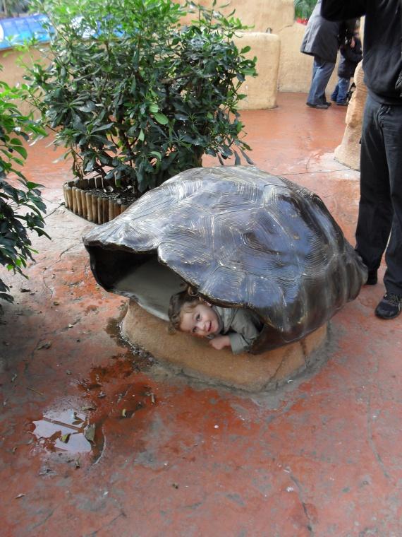 Valentine la tortue