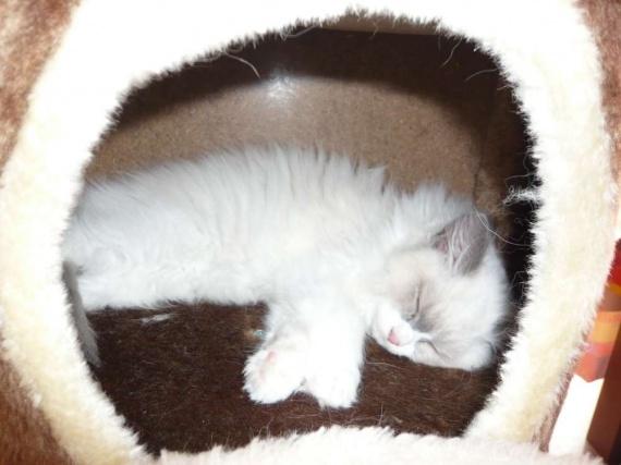 Dodo le chat do, le chat dormira bientôt...