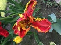 Et voilà cette belle fleur !!