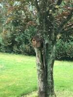 Des mésanges ont fait un nid dans la cabane ?