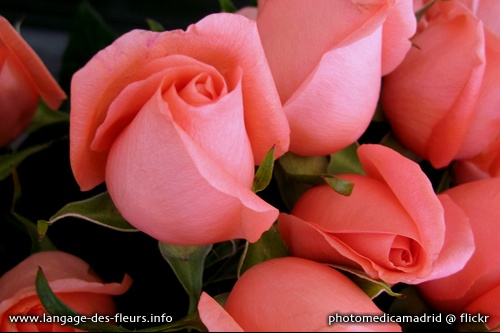 a-rose-1