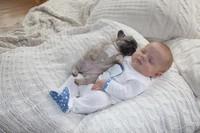 Bébé-chien