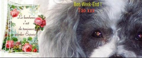 bonweek-end%20tao