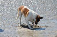 Nounours et son troutrou sur la plage