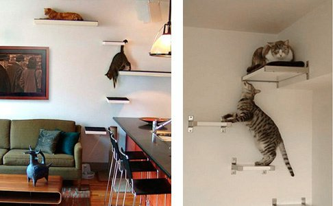 am nagement d 39 un studio pour mes chats chats forum animaux. Black Bedroom Furniture Sets. Home Design Ideas