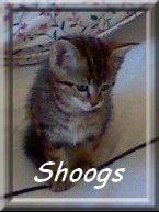 Shoogs