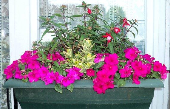 jardini re d 39 ombre mon jardin belle c 39 est moi photos club doctissimo. Black Bedroom Furniture Sets. Home Design Ideas