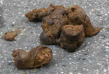 Les crottes de chien sur le trottoir