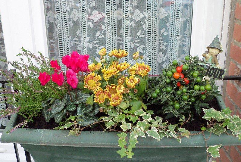 jardini re d 39 automne mon jardin belle c 39 est moi photos club doctissimo. Black Bedroom Furniture Sets. Home Design Ideas