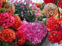 montagne de roses!