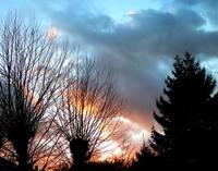 Arbres en feu au fond du jardin, la nuit tombe...