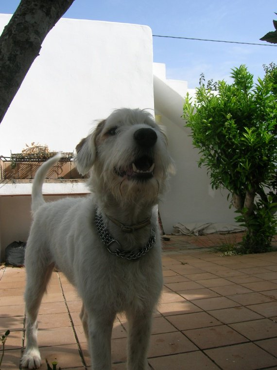 Maison Ibiza 09 017