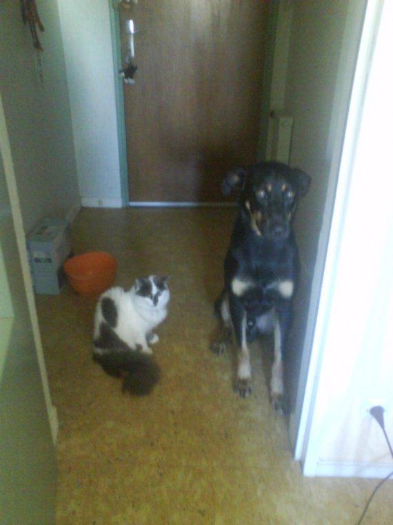 Plumo qui nous aquitté, avec son grand ami Dracko, notre chien