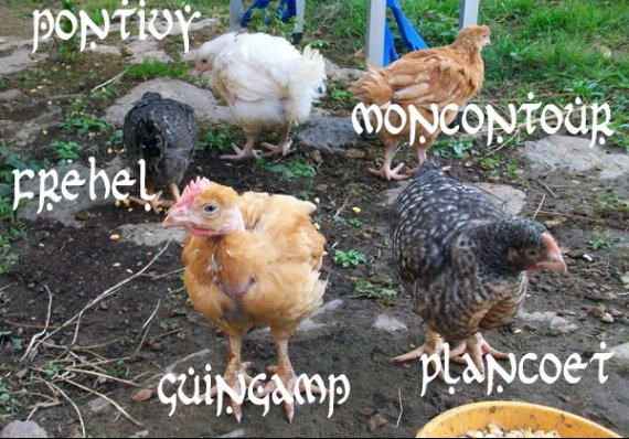 prénoms des poules bertonnes
