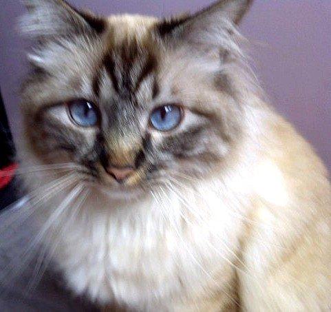 Forum Doctissimo Voyance : j 39 ai perdu mon chat voyance et divination forum psychologie ~ Medecine-chirurgie-esthetiques.com Avis de Voitures