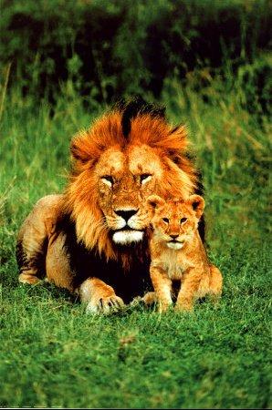 2400-1148~Lion-et-son-petit-Affiches