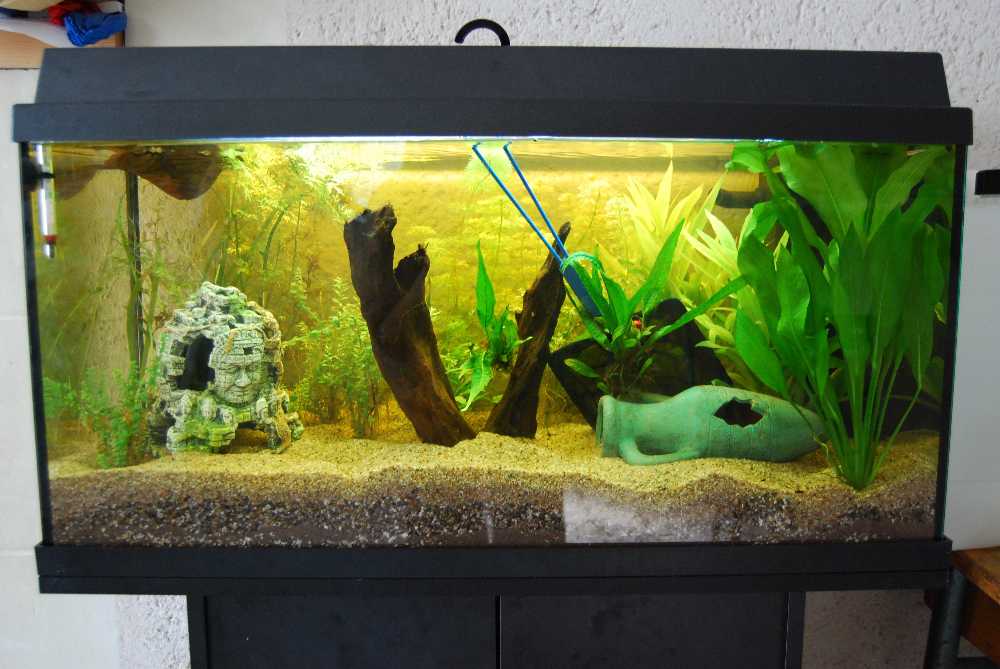 aquarium-dsc_0002-big