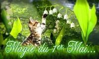 chat muguet