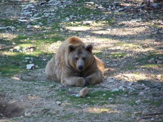 zoo du lunaret 24 février 2009 (71)
