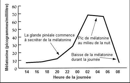 cycle-melatonine