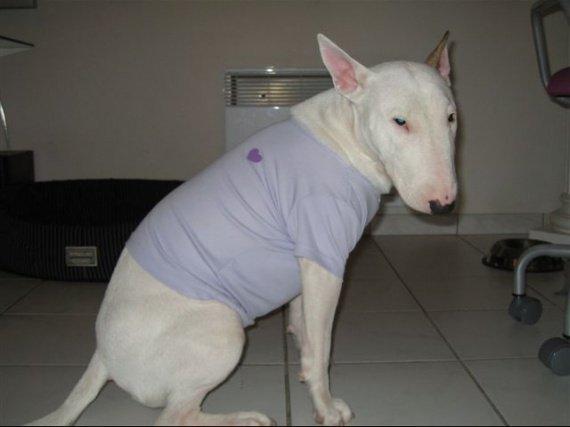 allergie de mon bull terrier - Chiens - FORUM Animaux