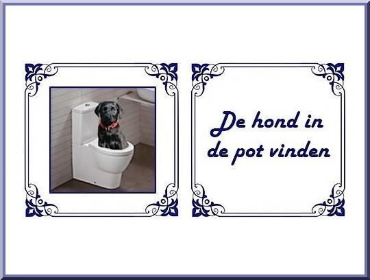 de hond in de pot vinden - nederlandse gezegden, spreekwoorden