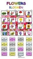 Flowers / Bloemen
