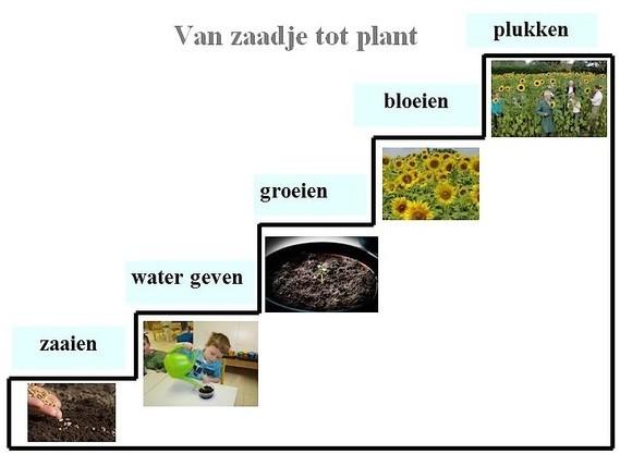 Van zaadje tot plant