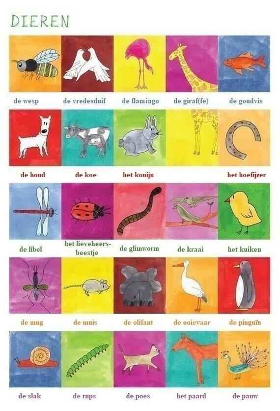 Dieren (illustratie)